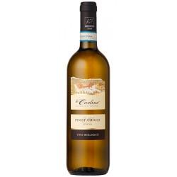 Organic white wine Pinot Grigio DOC Venezia BIO