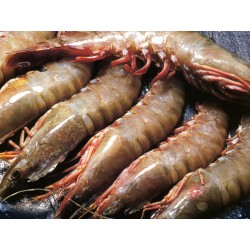 Shrimps from Mozambique