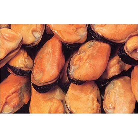 Mussels Meat