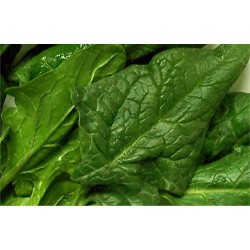 Spinach in bulk packing