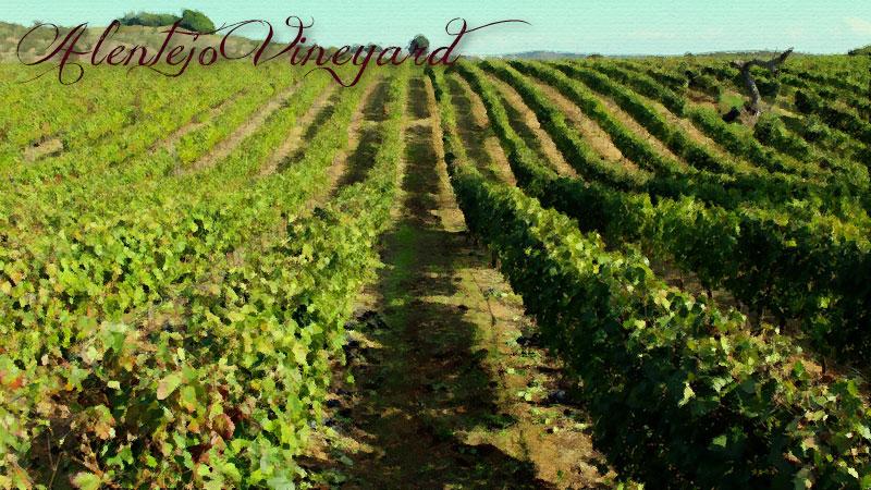Vineyard in Alentejo